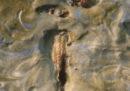 Hanno trovato una cavalletta in un quadro di van Gogh
