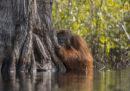 Le foto di natura che hanno vinto il concorso del National Geographic