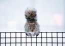 Animali e neve, non si sbaglia mai