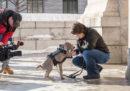 Questo cane salverà le opere d'arte a Boston