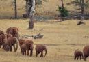 La paura per le api salverà gli elefanti