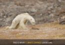 Di orsi polari, notizie false e problemi veri