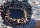 Una macchina fotografica persa in mare nel 2015 è stata ritrovata, ed era ancora carica