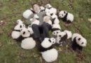 Panda di supporto emotivo