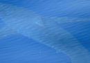 Èstato avvistato un grande squalo bianco alle Baleari, dopo 40 anni