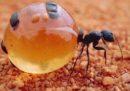 La cosa più buona mangiata dallo chef del Noma l'anno scorso è stata una formica ?