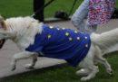 Brexit potrebbe avere conseguenze anche per gli animali da compagnia