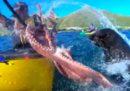 Il video di un tizio che si è preso un polpo in faccia da una foca, letteralmente