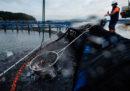 Dovremmo ripensare a come uccidiamo i pesci?