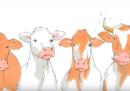 In Svizzera è stato bocciato il referendum che chiedeva di dare incentivi economici ai contadini che lasciavano le corna ai bovini e alle capre dei loro allevamenti