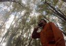 Gipi, Salvini e gli alberi