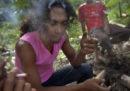 La Thailandia ha legalizzato la marijuana per scopi terapeutici