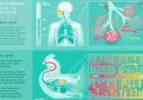 Tre GIF per tre modi diversi di respirare degli animali