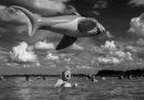 14 foto finaliste del concorso dello Smithsonian
