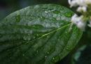 L'estinzione delle piante