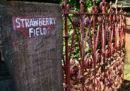 Dal 14 settembre Strawberry Field, l'ex orfanotrofio che ispirò una canzone dei Beatles, aprirà per la prima volta al pubblico
