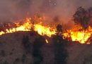Nell'Australia orientale ci sono decine di incendi boschivi fuori controllo