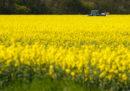 I sussidi europei all'agricoltura sono un problema