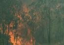 Le persone morte a causa degli incendi in Australia sono 4