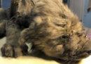 In Siberia è stato ritrovato un cucciolo di 18 mila anni fa