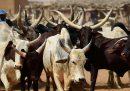Il Ciad darà all'Angola 75mila capi di bestiame per ripagare un debito