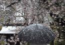 Foto per chi ha nostalgia di neve e fiori