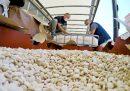 A Salerno sono state sequestrate 14 tonnellate di amfetamine