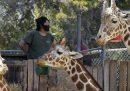 Ad alcuni animali negli zoo mancano le persone