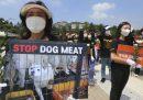 Si mangia meno carne di cane, in Corea del Sud