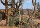 La Namibia metterà all'asta 170 elefanti
