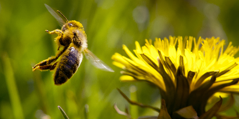 La stagione delle allergie dura di più - Il Post