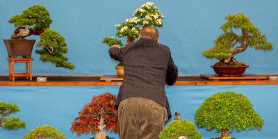 Guida alla cura di un bonsai, per principianti