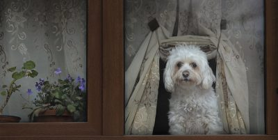 Cosa serve per accogliere un cane in casa
