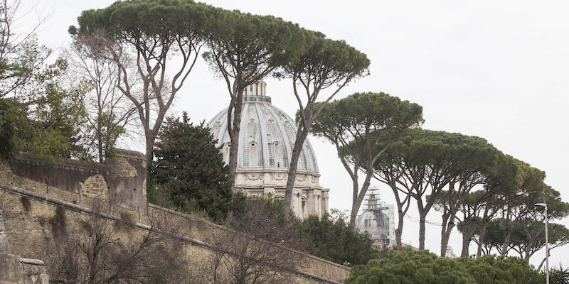 Un insetto sta distruggendo i pini di Roma