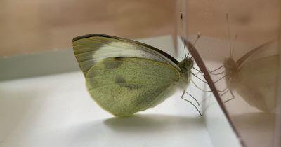 Vuoi salire a vedere le mie farfalle?