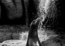 Allo zoo, a fotografare come stanno le bestie feroci
